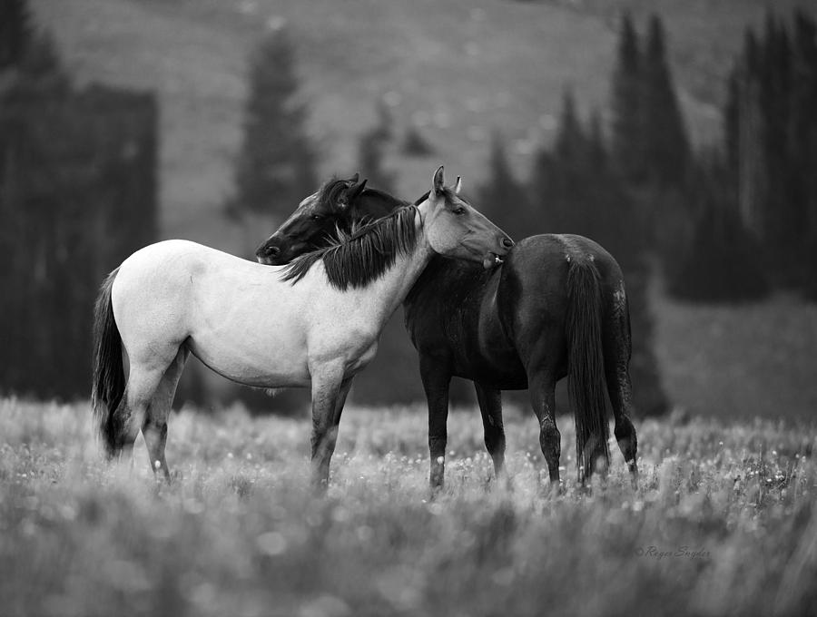 Beautiful Photograph - Mustangs Grooming 1 Bw by Roger Snyder