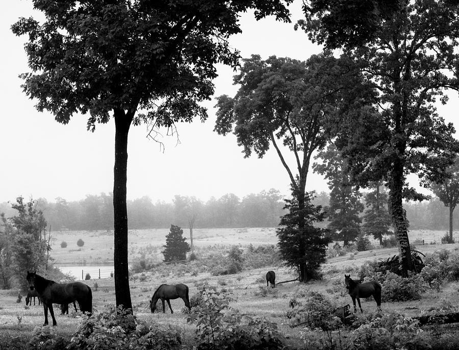 Horse Photograph - Mustangs by Randy Davidson