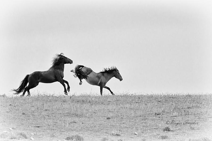 Beautiful Photograph - Mustangs Sparring 1 by Roger Snyder