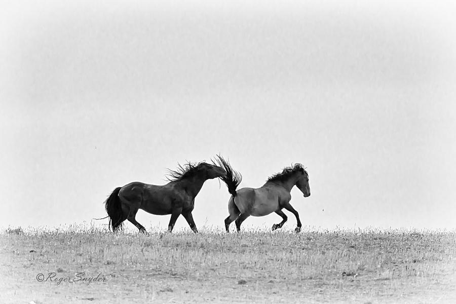 Beautiful Photograph - Mustangs Sparring 2 by Roger Snyder