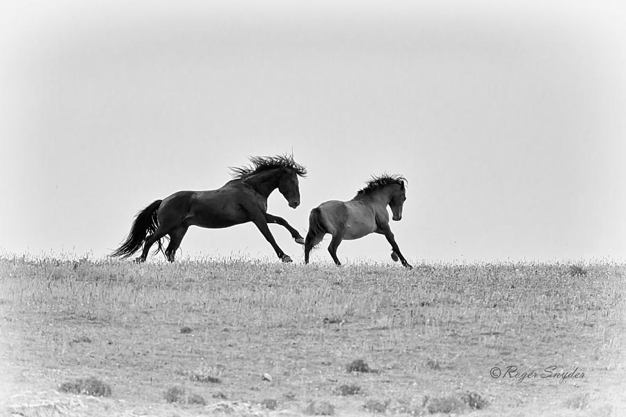 Beautiful Photograph - Mustangs Sparring 3 by Roger Snyder