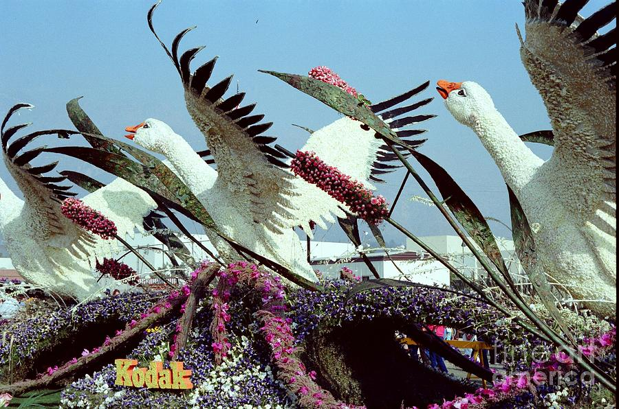 Festival Photograph - Mute Swans Rose Parade Float By Kodak by Julie Doerges
