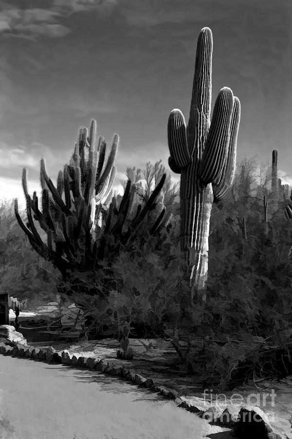 Cactus Photograph - Mutt And Jeff by Jon Burch Photography