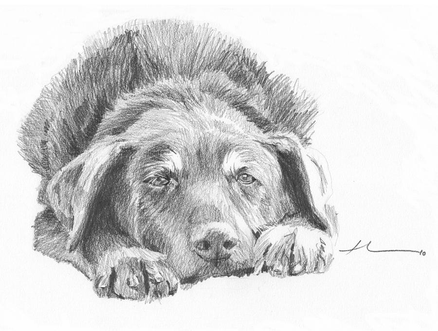 Mutt Pencil Portrait Drawing by Mike Theuer