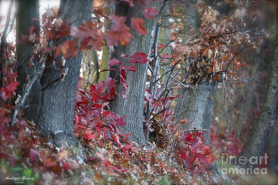 My Autumn Nostalgia. Photograph by  Andrzej Goszcz