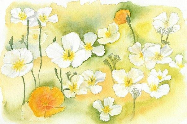 California Painting - My Backyard Beauties by Anne Woods