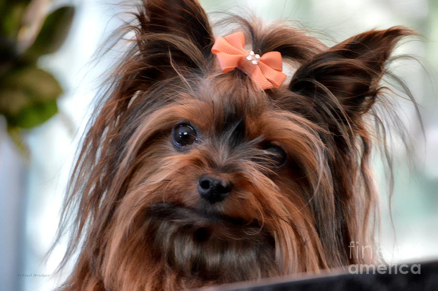 Dog Photograph - My Beauty by Gail Bridger