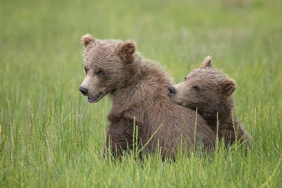 Bear Photograph - My Best Friend by Renee Doyle