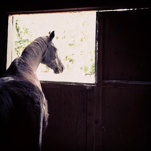 Horse Photograph - My Boy Reyo. He Will Be 25 This Year by Blenda Studio