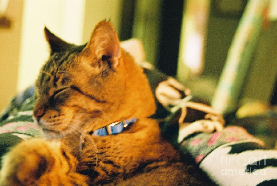 Cat Photograph - My Cat by Debbie Wells
