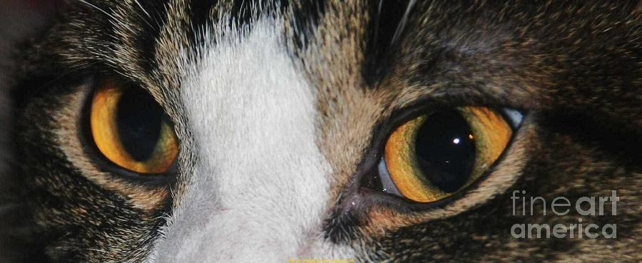 Cat Prints Photograph - My Cat Is The Cat Of All Cats by PainterArtist FIN