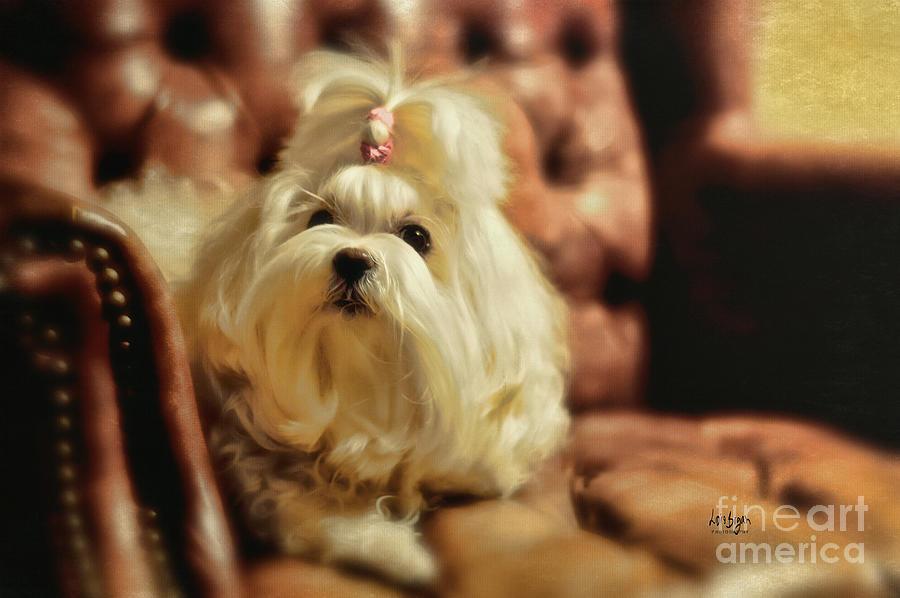 Dog Photograph - My Chair by Lois Bryan