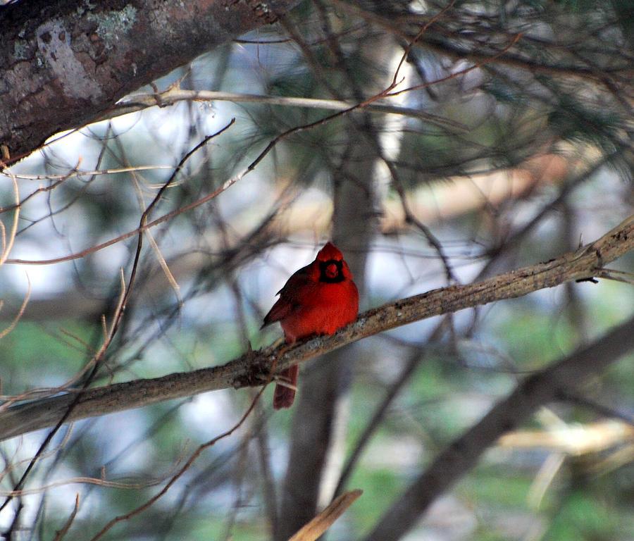 Cape Cod Photograph - My Favorite Neighbor by Lorena Mahoney