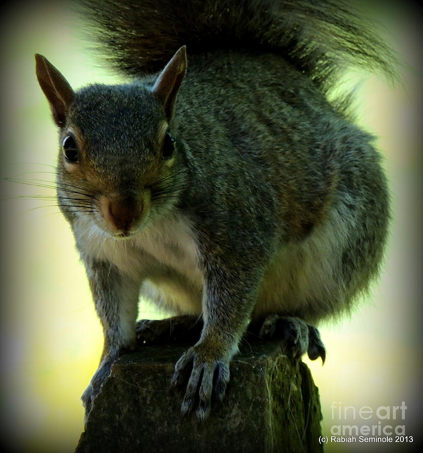 Squirrel Photograph - My Friend by Rabiah Seminole