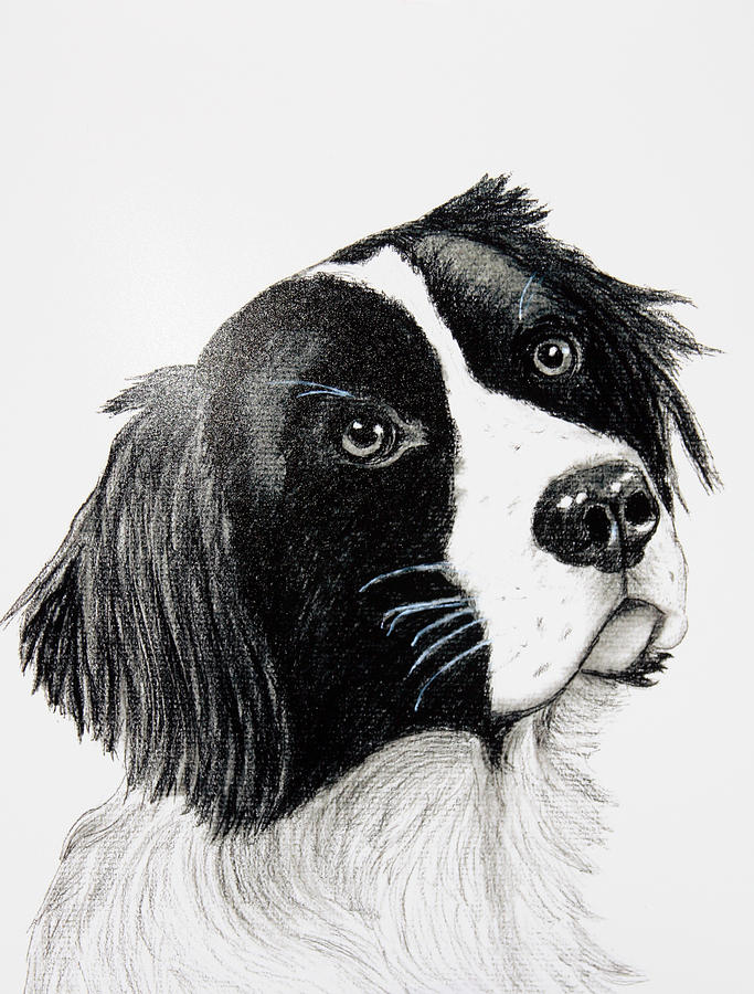Dogs Drawing - My Friend Sam by Lorraine Foster