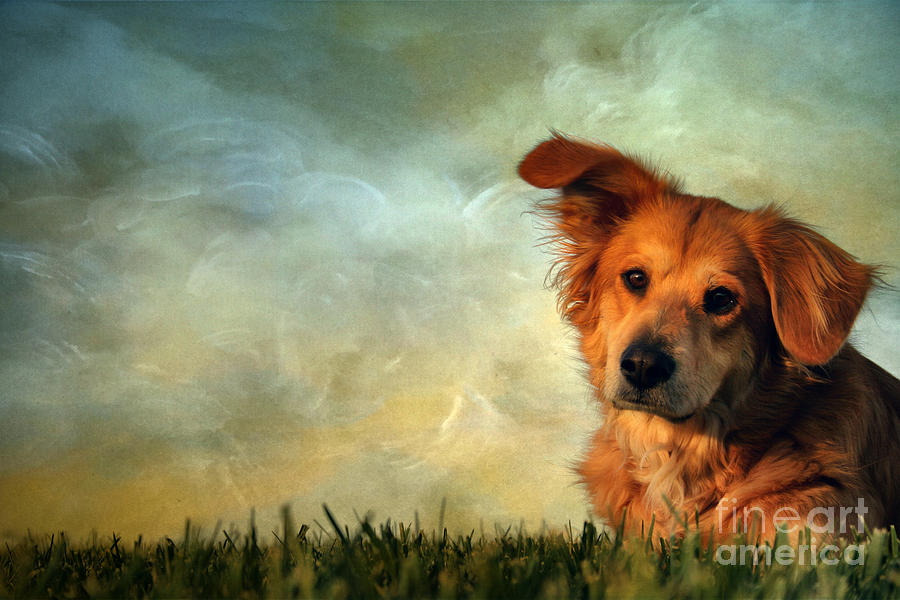 Adorable Photograph - My Girl by Darren Fisher