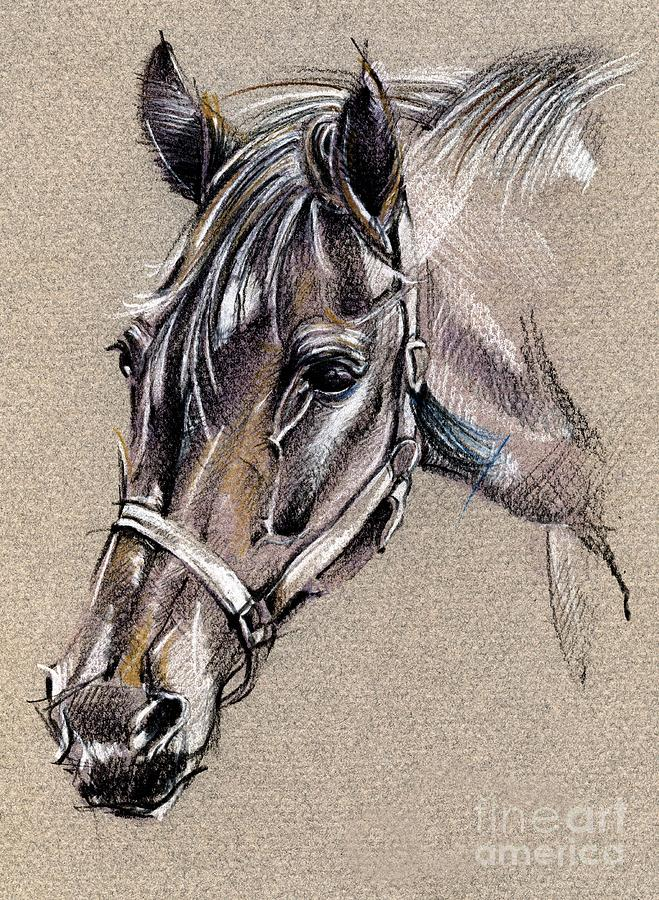 Horse Drawing Drawing - My Horse Portrait Drawing by Daliana Pacuraru