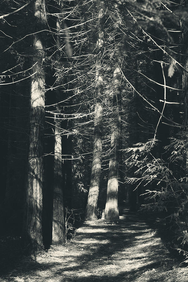 Redwood Regional Park Photograph - My Light Still Shines For You by Laurie Search