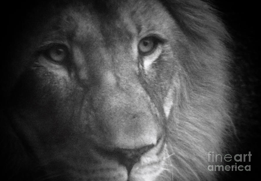 Animals Photograph - My Lion Eyes by Thomas Woolworth