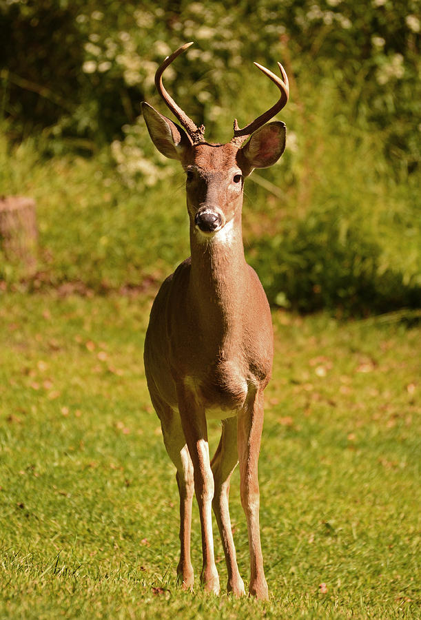 Deer Photograph - My Little Buddy by Lori Tambakis