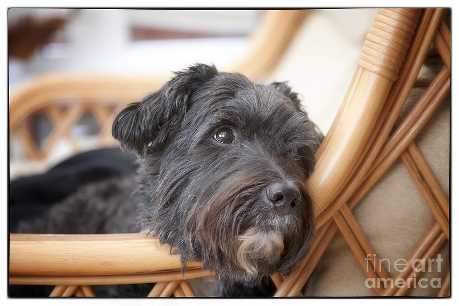 Dog Photograph - My Loyal Friend by Natalie Kinnear