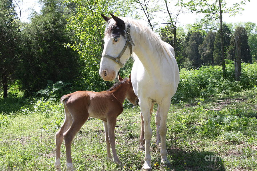 Horse Photograph - My Mama by Connie Mueller