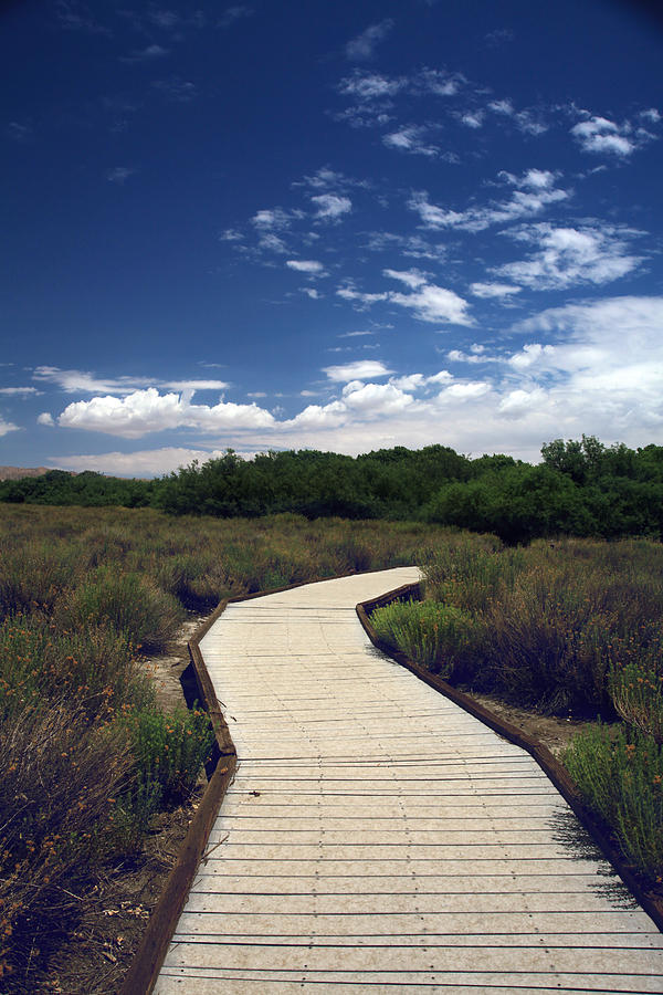 Big Morongo Canyon Preserve Photograph - My Mind Wanders by Laurie Search