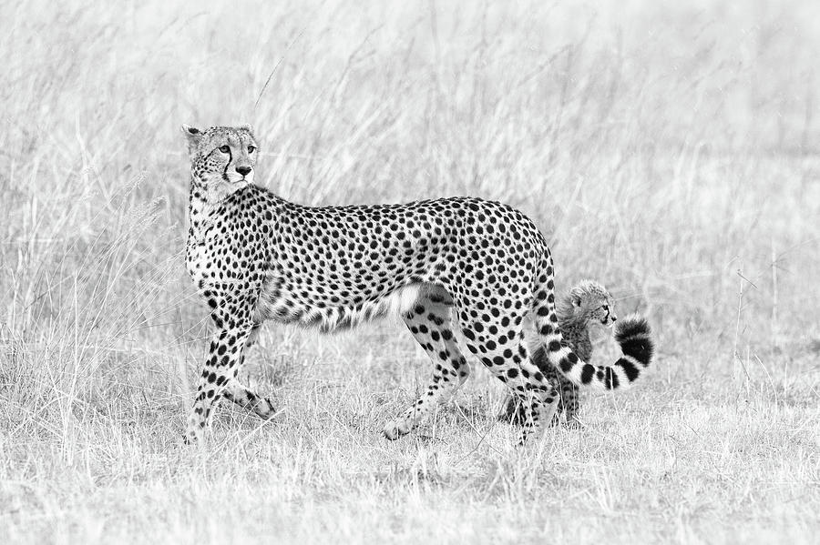 Cheetah Photograph - My Mom And I by Mohammed Alnaser