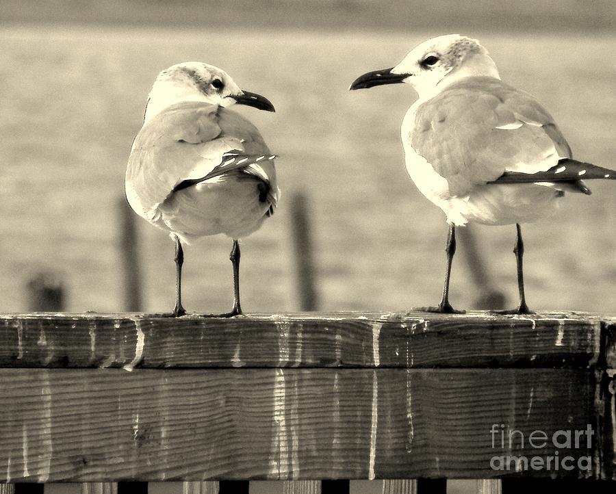 Sea Gulls Photograph - My Opinion Exactly by Joe Jake Pratt