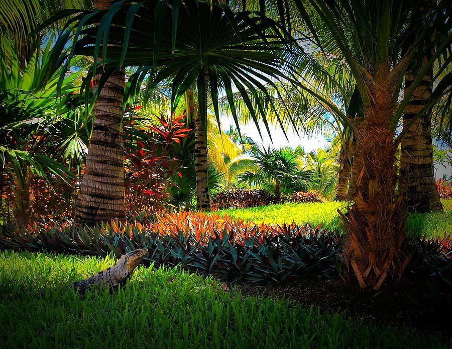 Iguanas Photograph - My Pal Iggy by Robert McCubbin