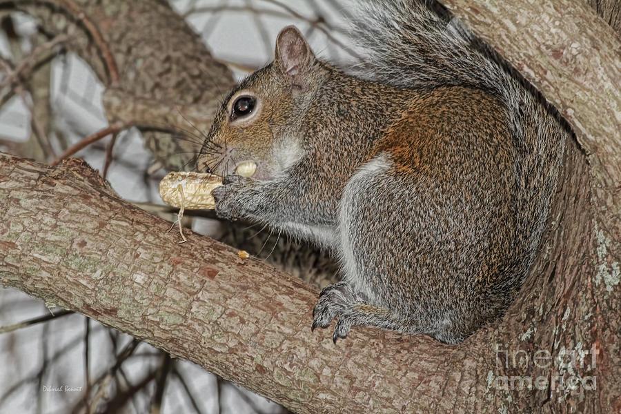Squirrel Photograph - My Peanut by Deborah Benoit