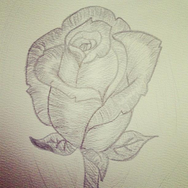 Pencil photograph my rose rose flower pencil drawing by emma carpenter