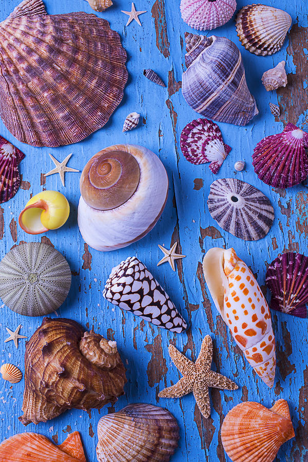 Starfish Photograph - My Shell Collection by Garry Gay