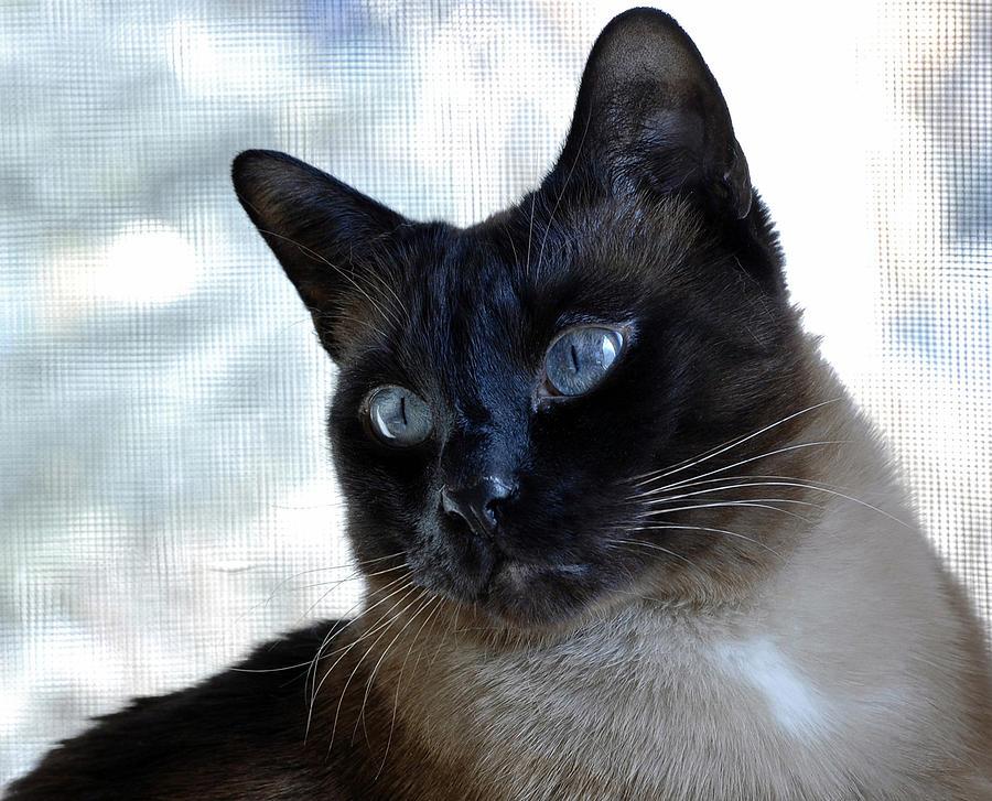 Cat Photograph - My Window.  My World. by Sheila Faryna