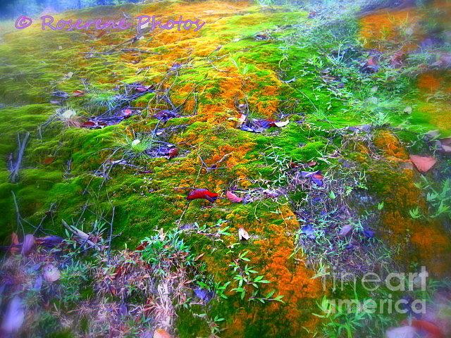 Myriad Of Colours Iv Photograph by Yuki Tsurara