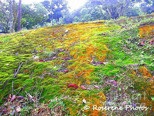 Myriad Of Colours Photograph by Yuki Tsurara