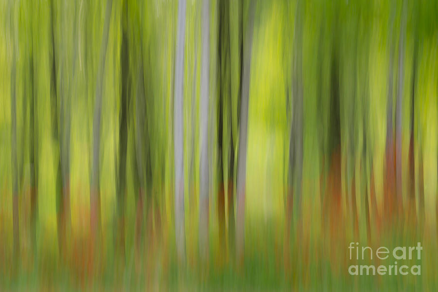 Forest Photograph - Mysterious Forest 2 by Lilianna Sokolowska
