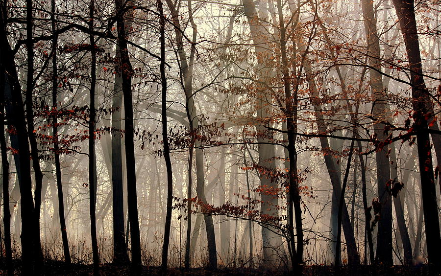 Forest Photograph - Mysterious Forest by Rosanne Jordan
