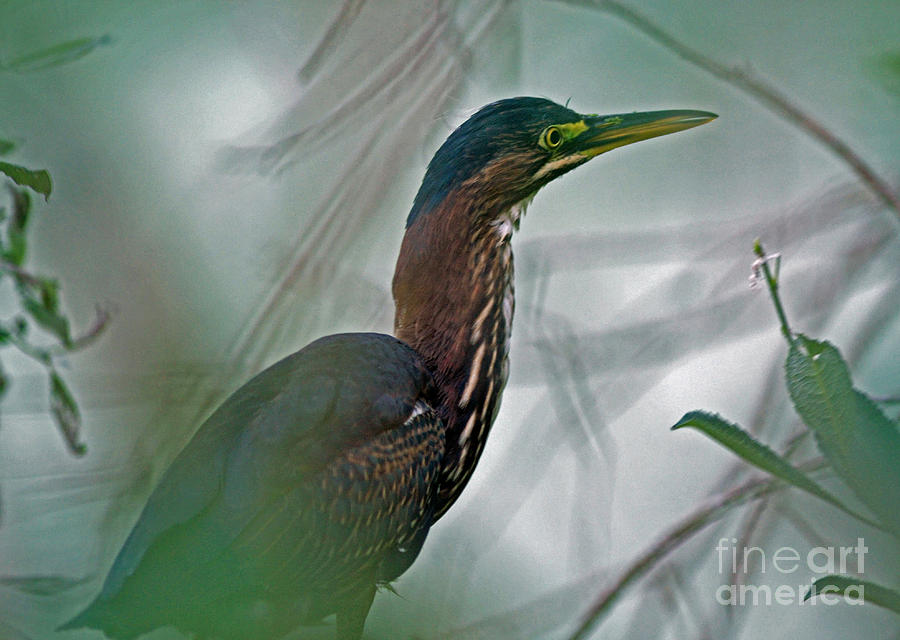 Marsh Photograph - Mystery In The Marsh by Inspired Nature Photography Fine Art Photography