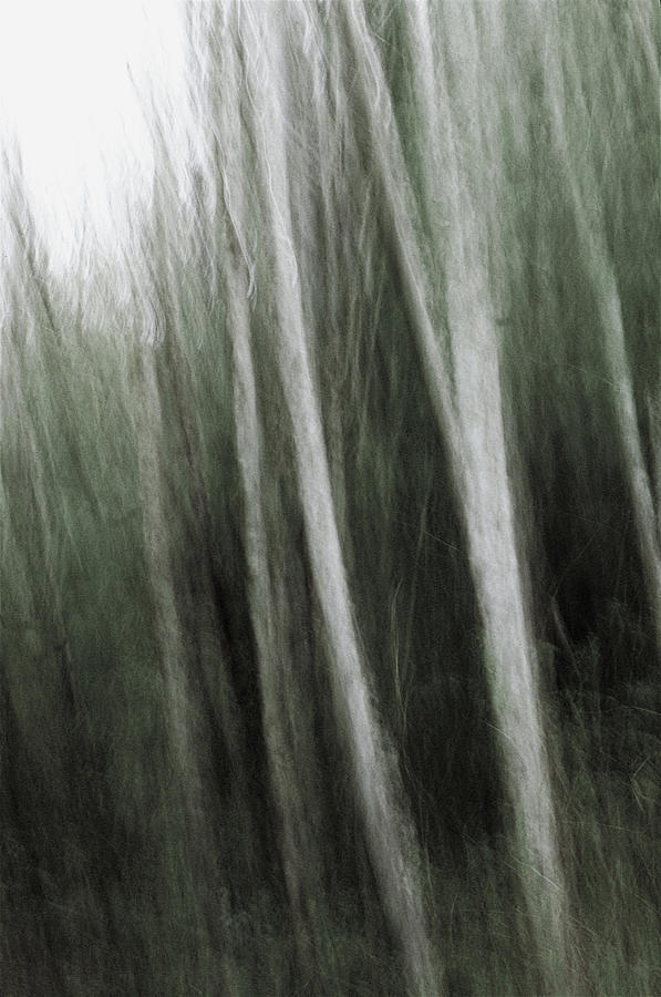 Abstract Photograph - Mystic Forest by Kim Lessel