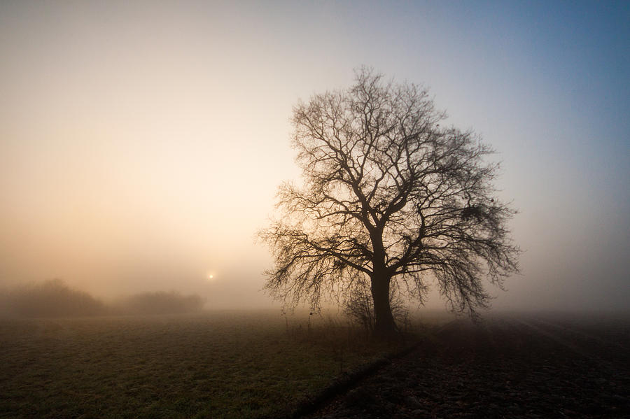 Landscape Photograph - Mystic Morning by Davorin Mance