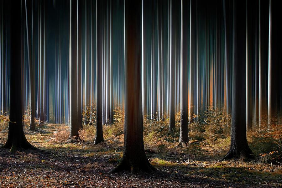 Landscape Photograph - Mystic Wood by Carsten Meyerdierks