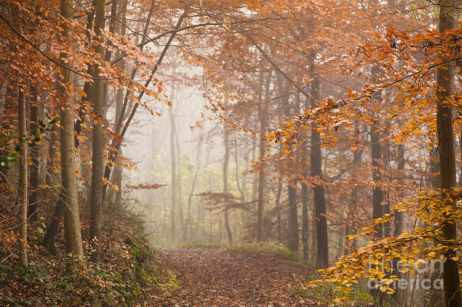 Atmospheric Photograph - Mystic Woods by Anne Gilbert