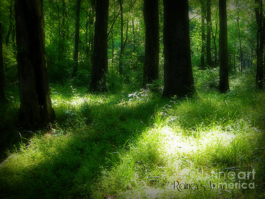Forest Photograph - Mystical Forest by Lorraine Heath