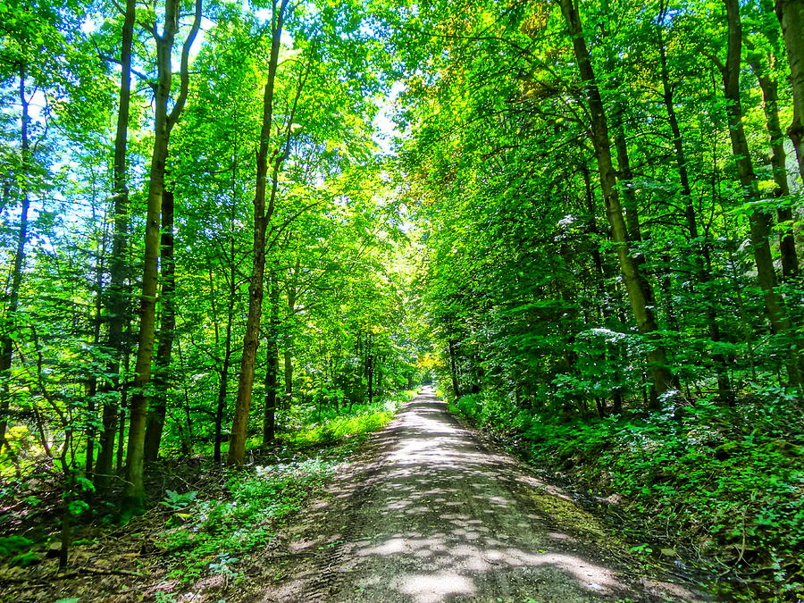 Forest Photograph - Mystical Forest Walk On Famous Goldsteig Trail by ...Famous Forest Paintings