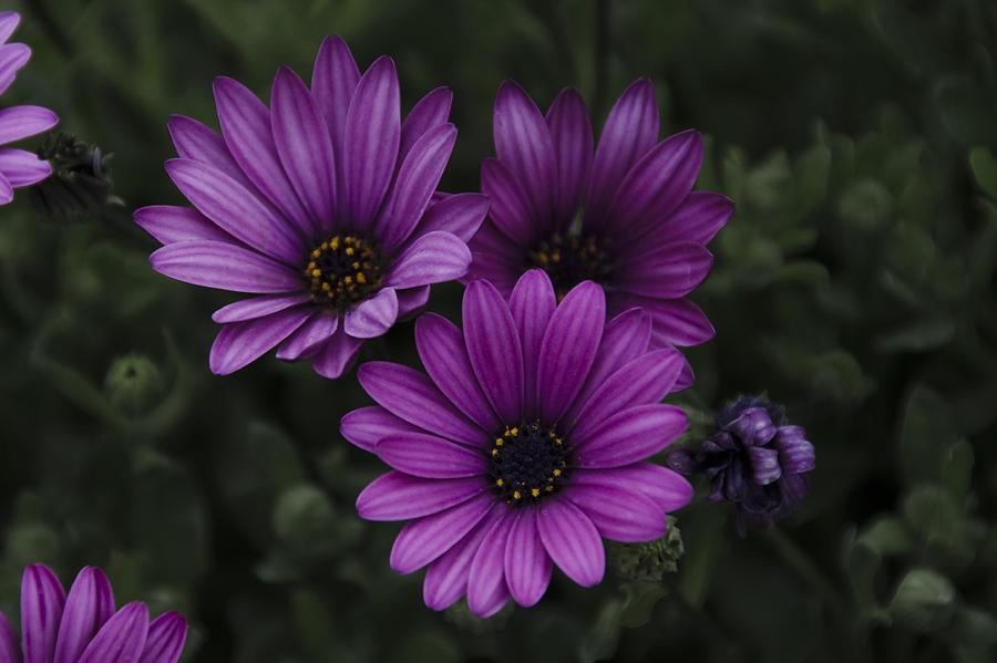 Mystical Photograph - Mystical Purple by Penny Lisowski
