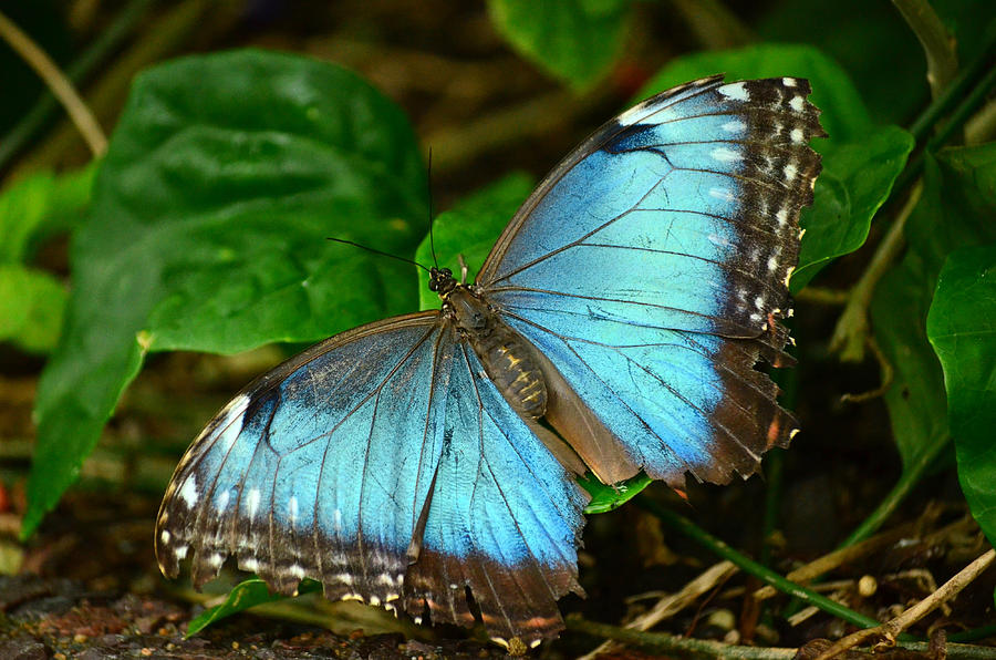 Butterfly Photograph - Mystical Wings by Fraida Gutovich