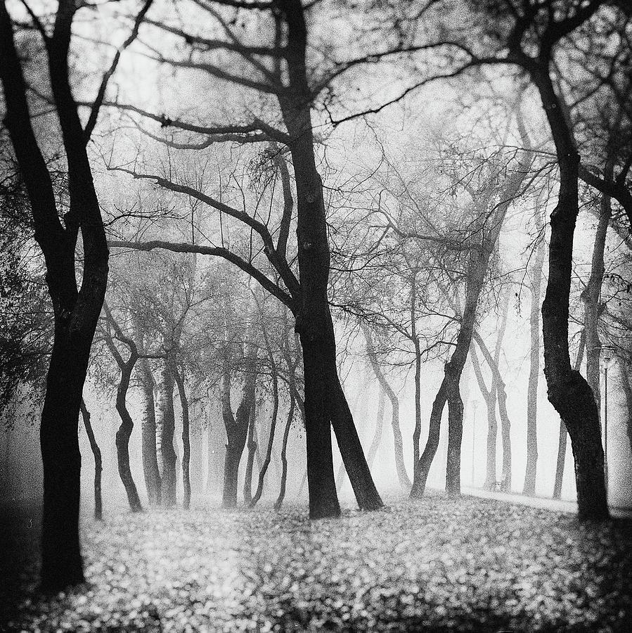Forest Photograph - Mystique by Marchevca Bogdan