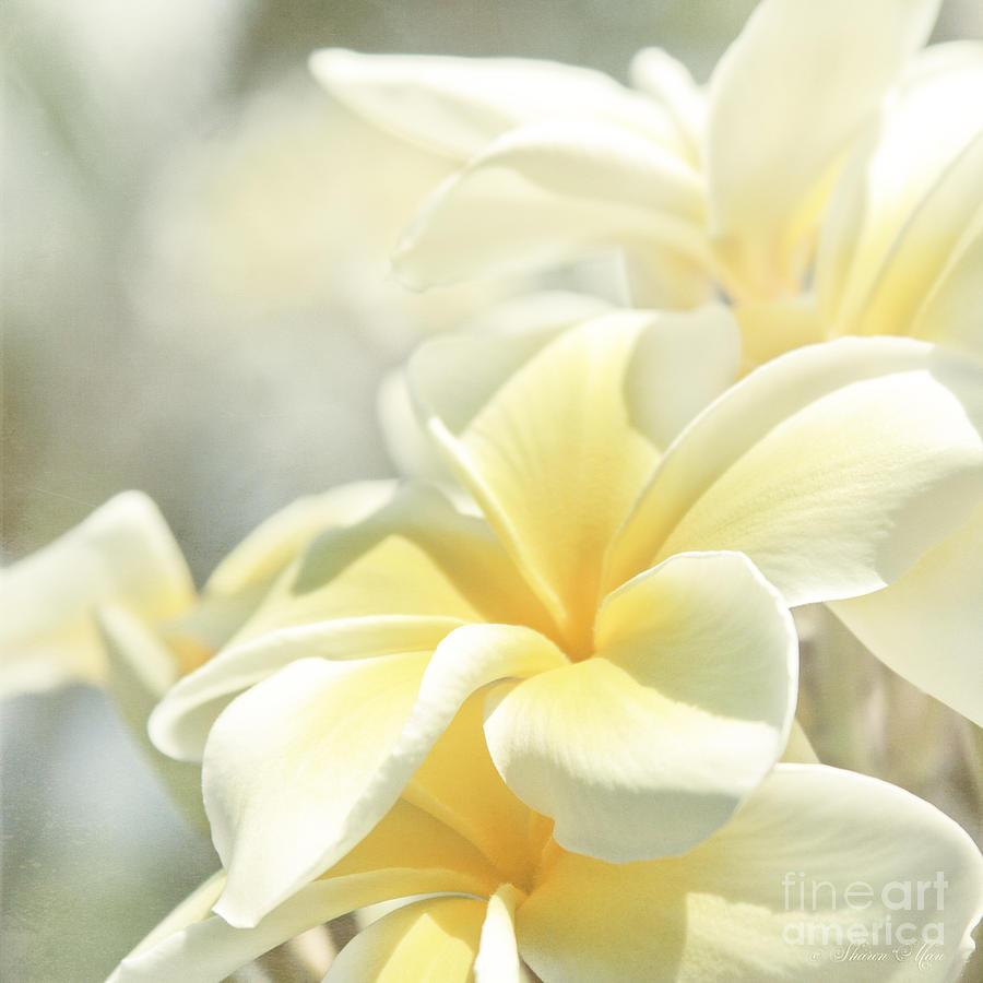 Plumeria Photograph - Na Lei Pua Melia Aloha E Ko Lele by Sharon Mau