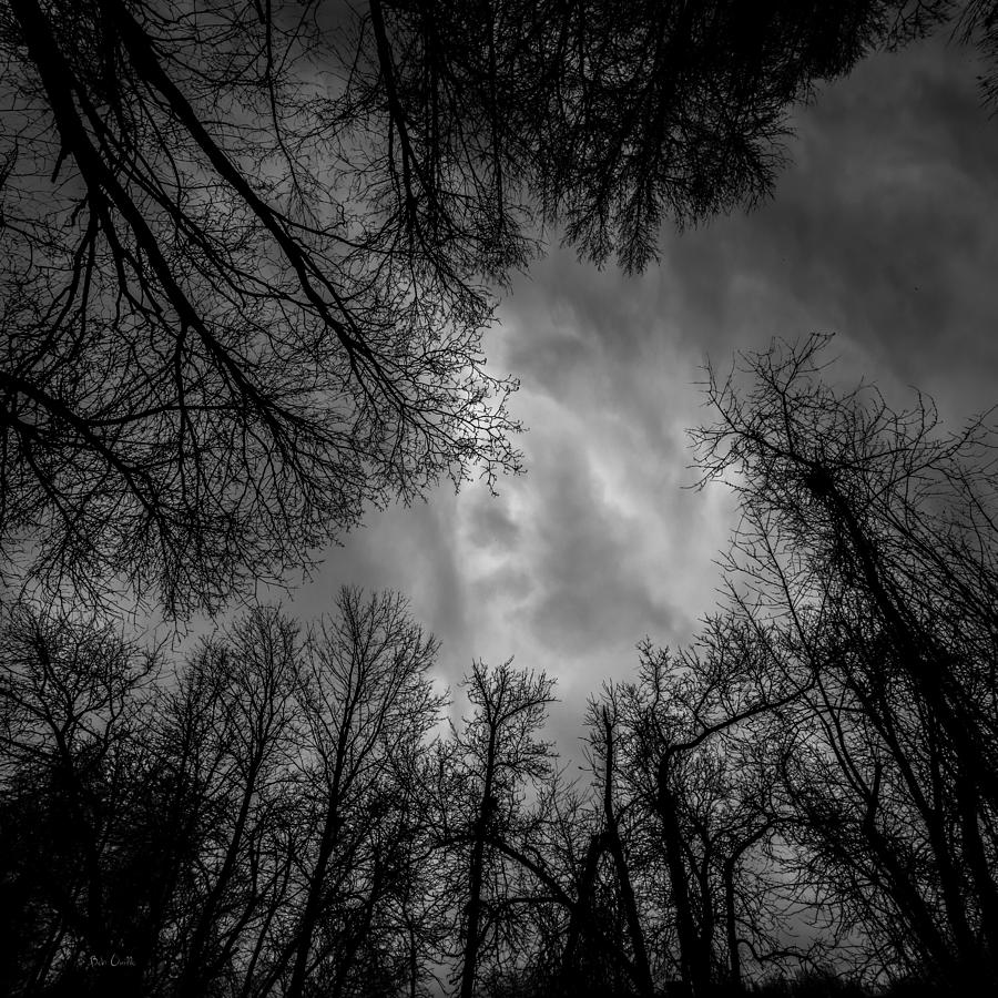 Tree Photograph - Naked Branches by Bob Orsillo